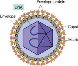 انواع علائم ویروس کرونا کووید 19 نشانه ها درمان و پیشگیری مراحل خفیف تا شدید بیماری روز به روز